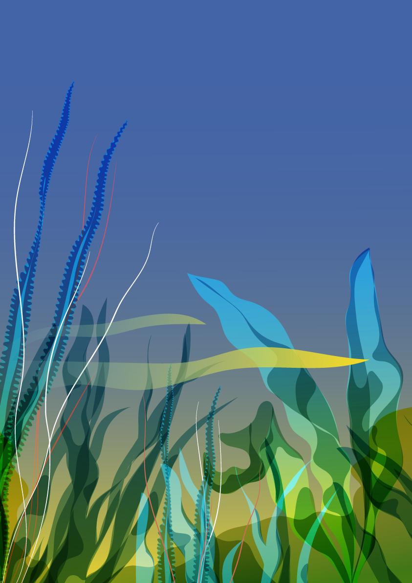#6 : Les algues